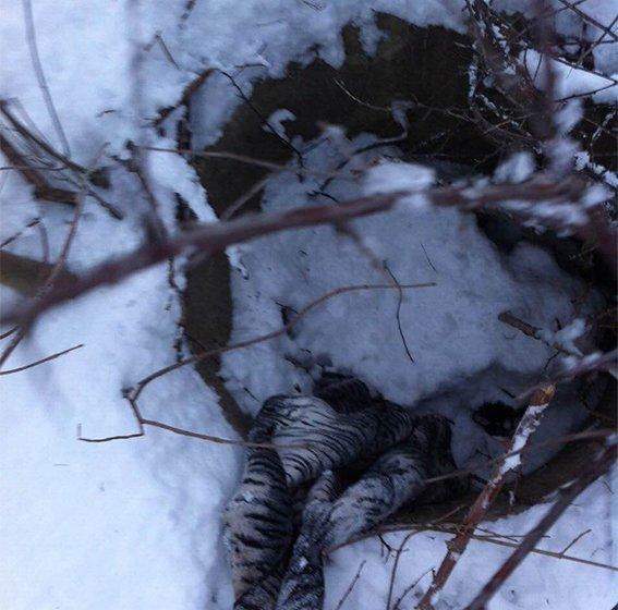 В Днепропетровской области убили таксиста: подозреваемых задержали (ФОТО), фото-2