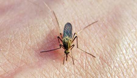kak-zaschitit-dom-ot-komarov-sk-komfort %284%29