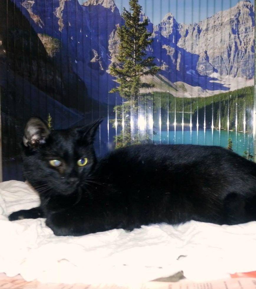 5 запорожских котиков, которые ищут дом, - ФОТО, фото-8