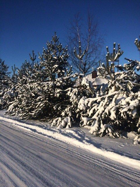 Полоцк и Новополоцк под снегом. Лучшие фото из социальных сетей, фото-2