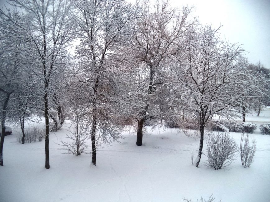 Полоцк и Новополоцк под снегом. Лучшие фото из социальных сетей, фото-1