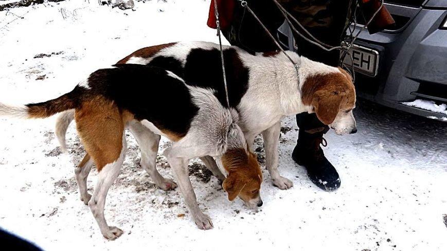 Мариупольским охотникам  наконец-то разрешили провести отстрел животных (ФОТОРЕПОРТАЖ), фото-2