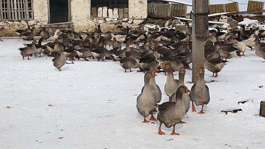 Мариупольским охотникам  наконец-то разрешили провести отстрел животных (ФОТОРЕПОРТАЖ), фото-17