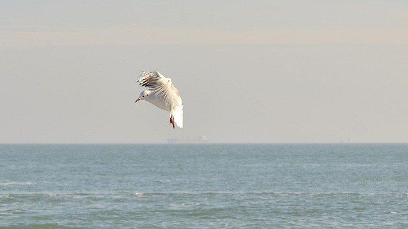 Одесситы вышли к морю греться на солнце (ФОТО), фото-8