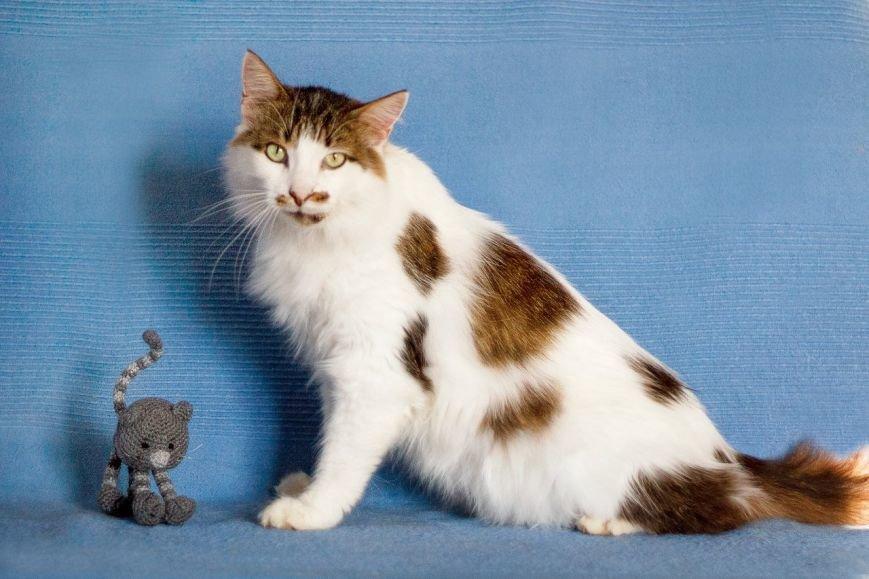 5 запорожских котиков, которые ищут дом, - ФОТО, фото-2
