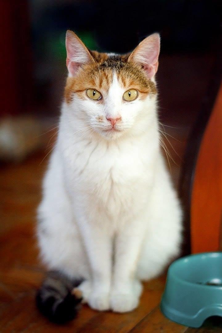 5 запорожских котиков, которые ищут дом, - ФОТО, фото-5