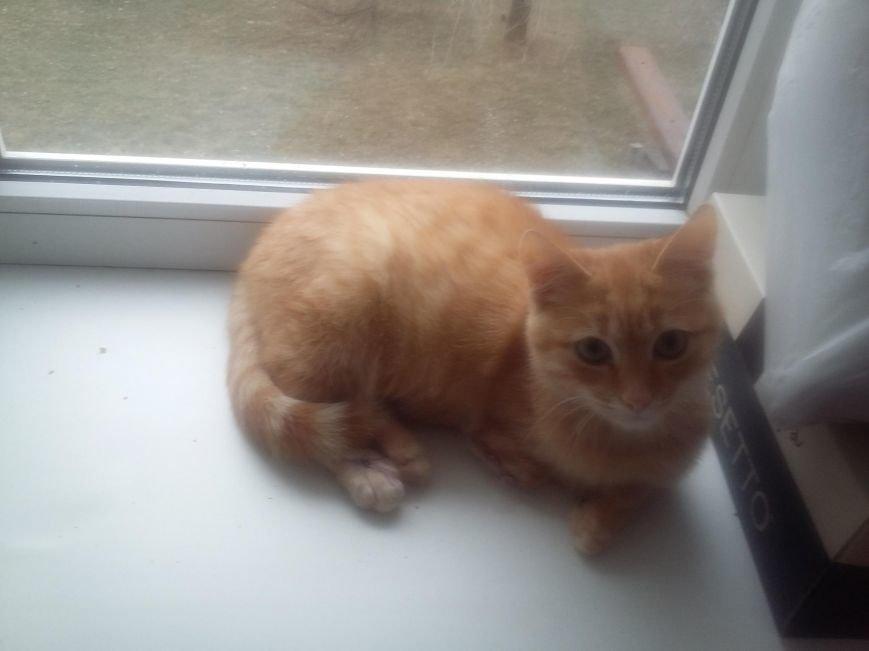 5 запорожских котиков, которые ищут дом, - ФОТО, фото-6