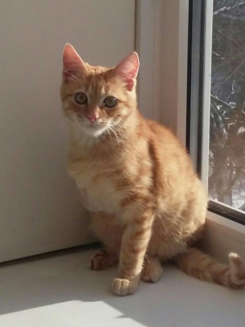5 запорожских котиков, которые ищут дом, - ФОТО, фото-7