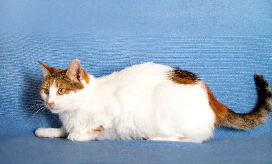5 запорожских котиков, которые ищут дом, - ФОТО, фото-4