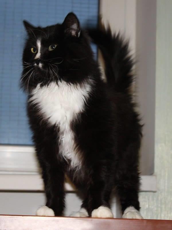 5 запорожских котиков, которые ищут дом, - ФОТО, фото-1