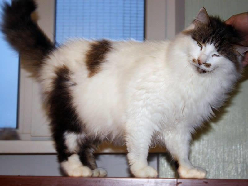 5 запорожских котиков, которые ищут дом, - ФОТО, фото-3