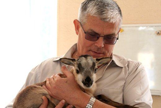 В одесском зоопарке родился милашка-ягненок (ФОТО), фото-1