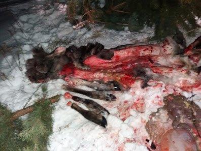На Сумщине браконьеры убили лося и лосиху (ФОТО), фото-1