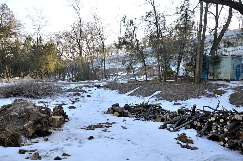В одесском парке уничтожены десятки деревьев (ФОТО), фото-6
