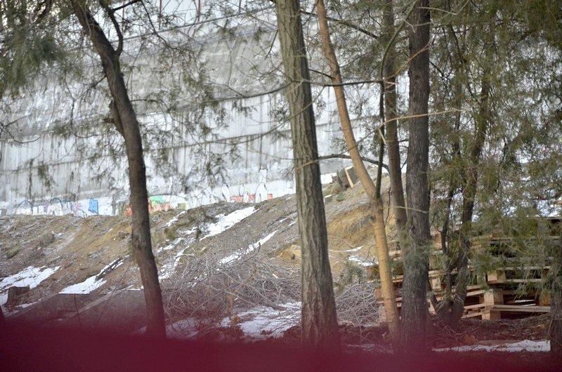 В одесском парке уничтожены десятки деревьев (ФОТО), фото-14