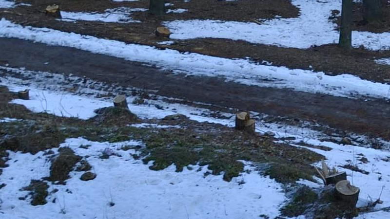 В одесском парке уничтожены десятки деревьев (ФОТО), фото-4