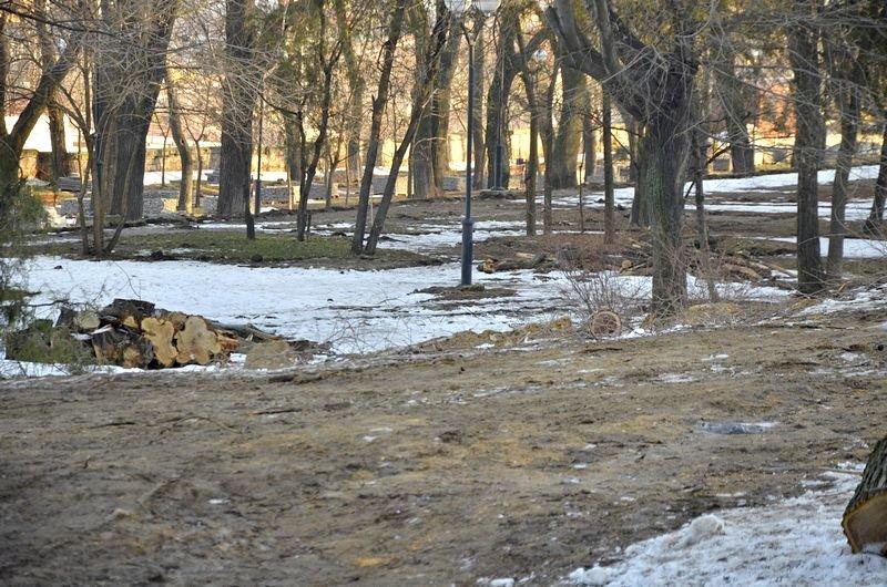 В одесском парке уничтожены десятки деревьев (ФОТО), фото-11