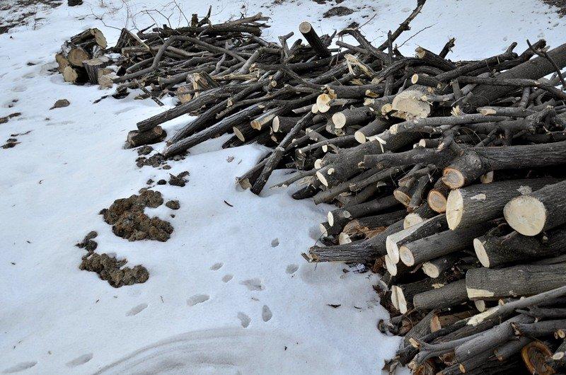 В одесском парке уничтожены десятки деревьев (ФОТО), фото-7