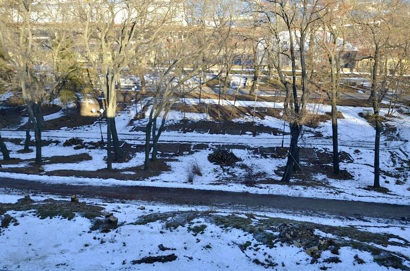 В одесском парке уничтожены десятки деревьев (ФОТО), фото-3