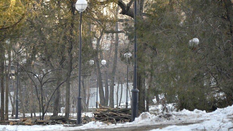 В одесском парке уничтожены десятки деревьев (ФОТО), фото-8