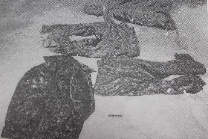 СК: жителю Новополоцка, застрелившему беременную лосиху, предъявлено обвинение, фото-2