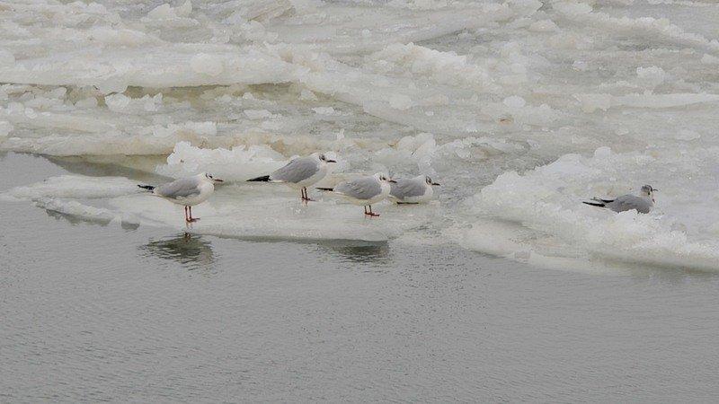 У берегов Одессы море покрылось льдинами (ФОТО), фото-20