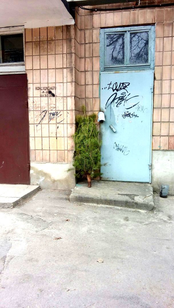 Мариупольцы начали выбрасывать елки во дворы (ФОТО), фото-3