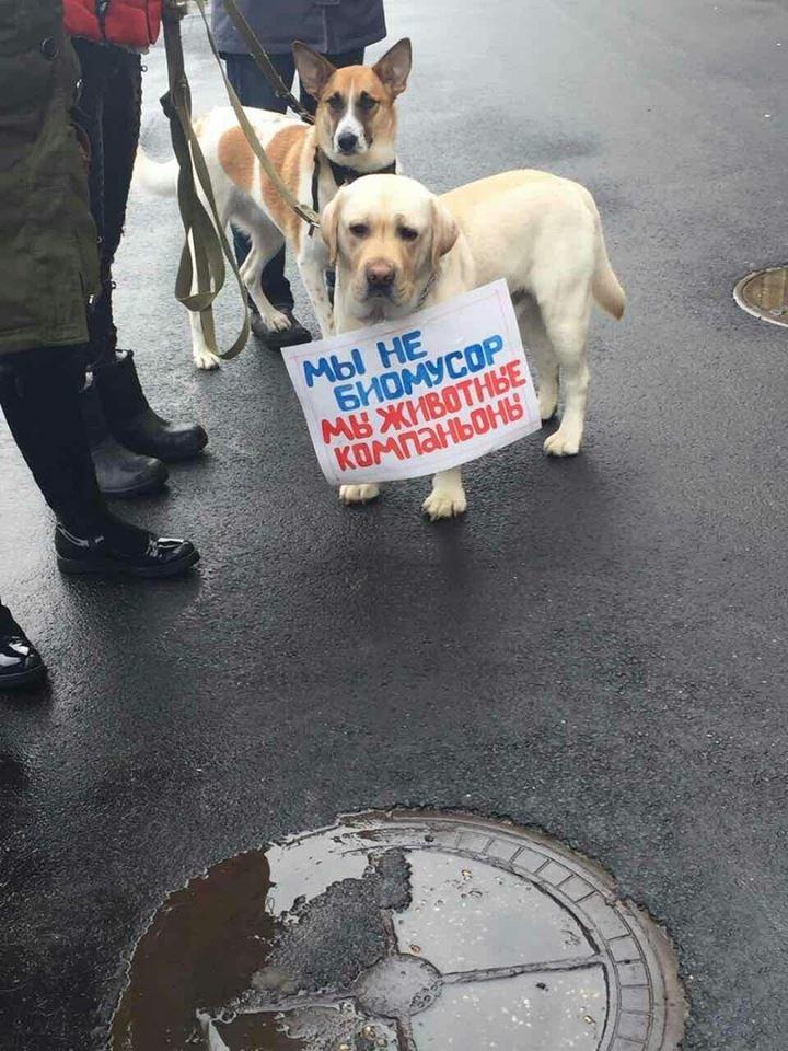 Харьковские зоозащитники просят мэрию не убивать бродячих собак (ФОТО), фото-5