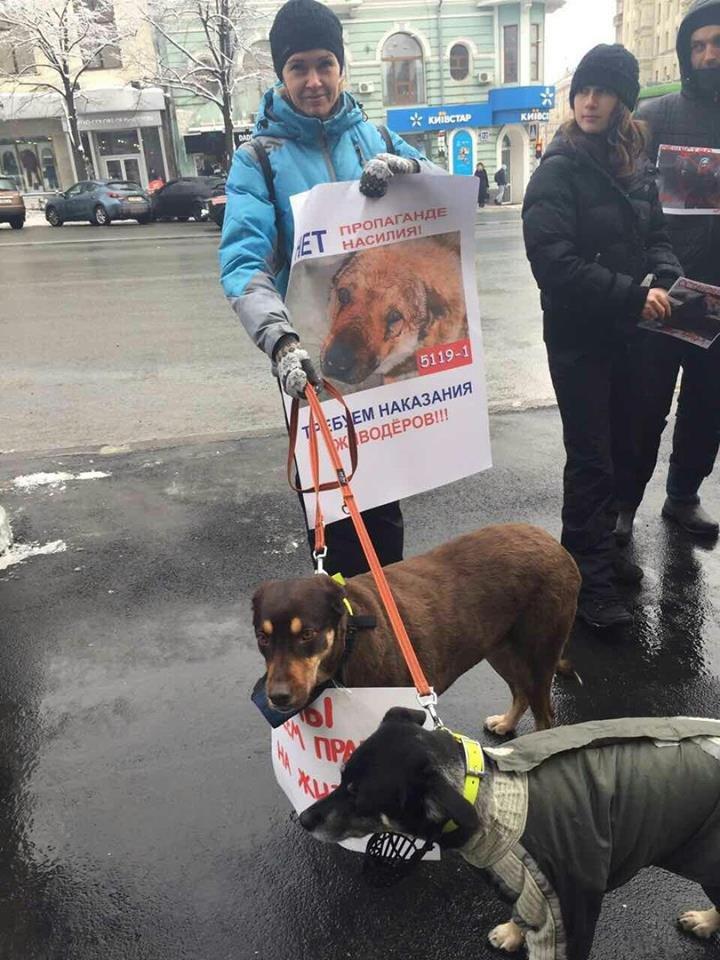 Харьковские зоозащитники просят мэрию не убивать бродячих собак (ФОТО), фото-4