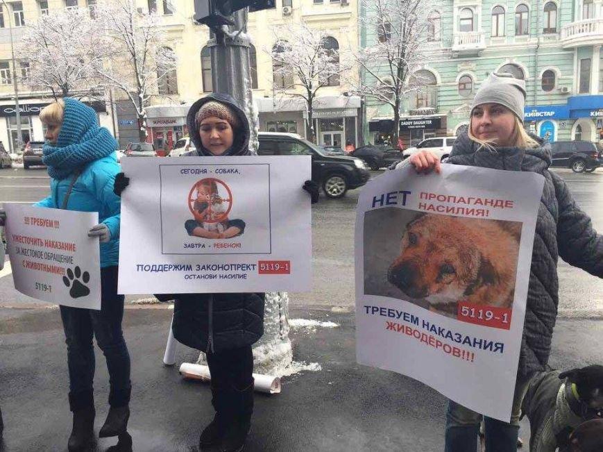 Харьковские зоозащитники просят мэрию не убивать бродячих собак (ФОТО), фото-3