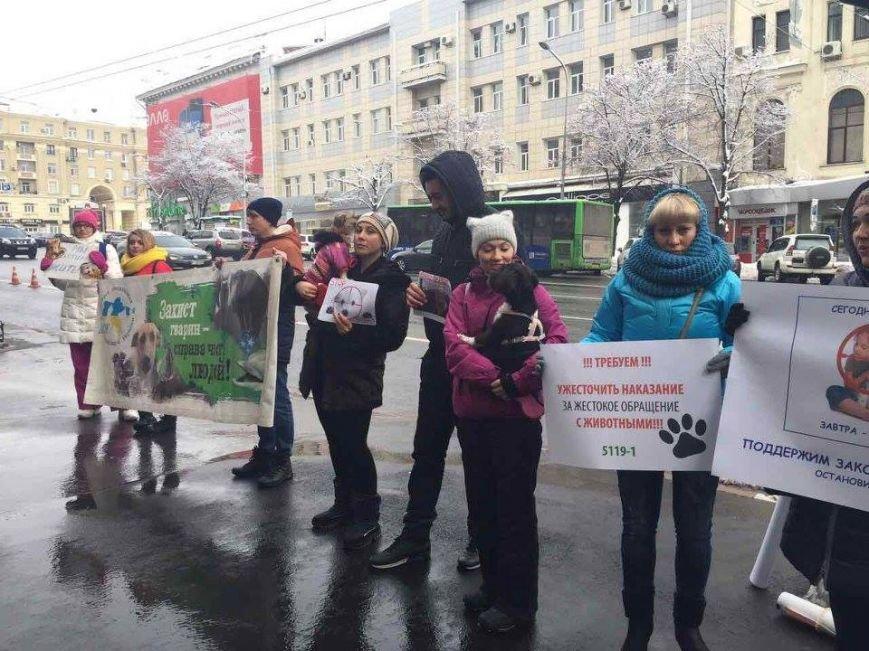 Харьковские зоозащитники просят мэрию не убивать бродячих собак (ФОТО), фото-2