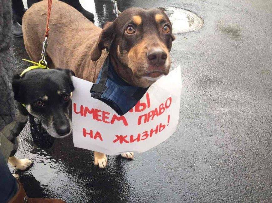 Харьковские зоозащитники просят мэрию не убивать бродячих собак (ФОТО), фото-1