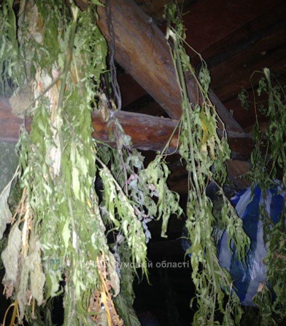 На Сумщине полиция нашла и изъяла партию наркотического сырья на 110 000 гривен (ФОТО), фото-1