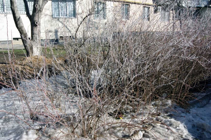 Одесса окунулась в зимнюю сказку (ФОТО), фото-2
