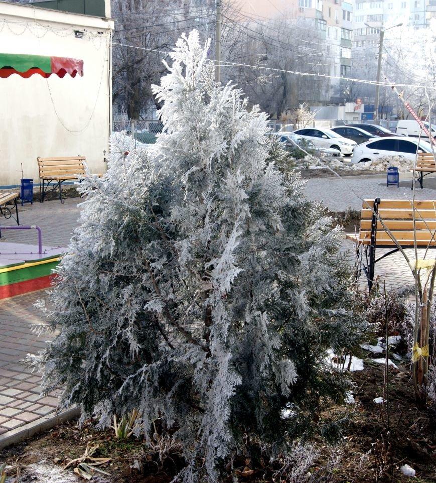 Одесса окунулась в зимнюю сказку (ФОТО), фото-1