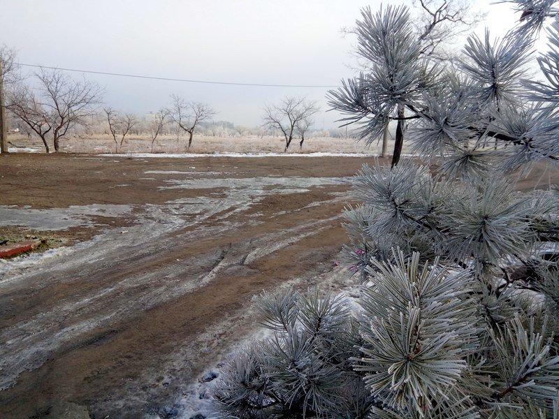 Море в Одессе стало похоже на кипящее молоко (ФОТО), фото-10