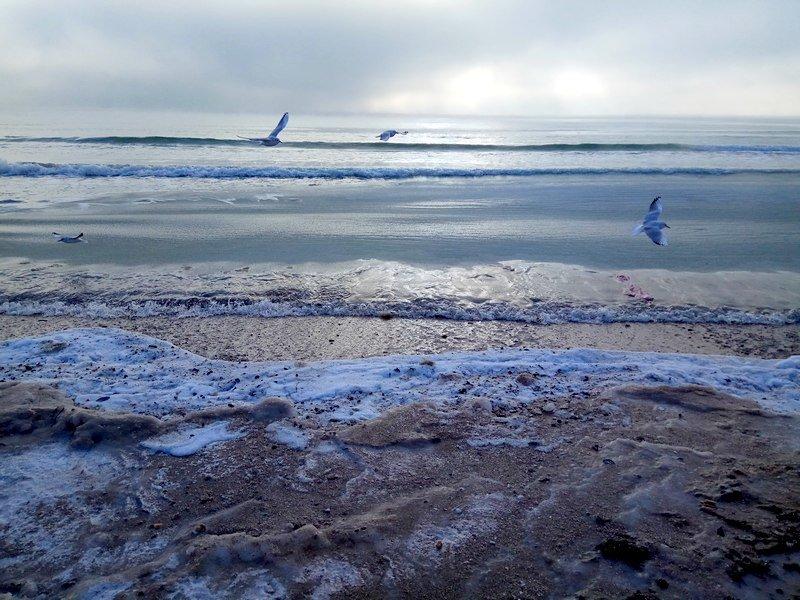 Море в Одессе стало похоже на кипящее молоко (ФОТО), фото-7