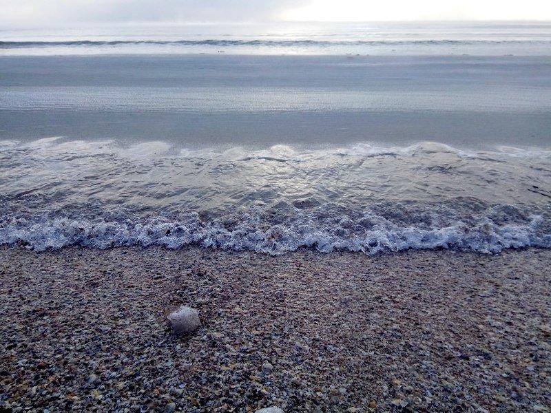 Море в Одессе стало похоже на кипящее молоко (ФОТО), фото-5