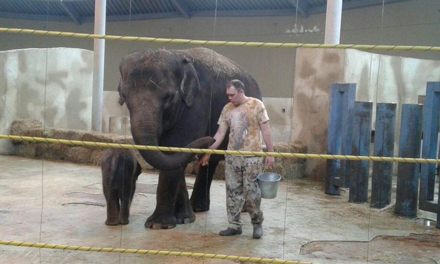 слон иТитов