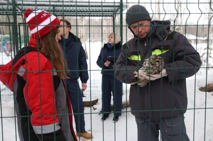 В белгородском зоопарке провели вакцинацию от птичьего гриппа. Фото, фото-6