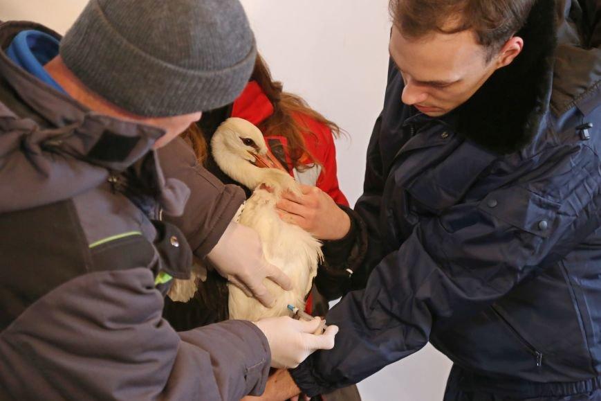 В белгородском зоопарке провели вакцинацию от птичьего гриппа. Фото, фото-3