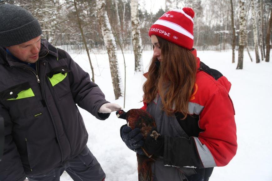 В белгородском зоопарке провели вакцинацию от птичьего гриппа. Фото, фото-10
