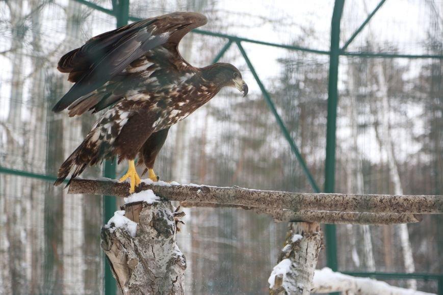 В белгородском зоопарке провели вакцинацию от птичьего гриппа. Фото, фото-7