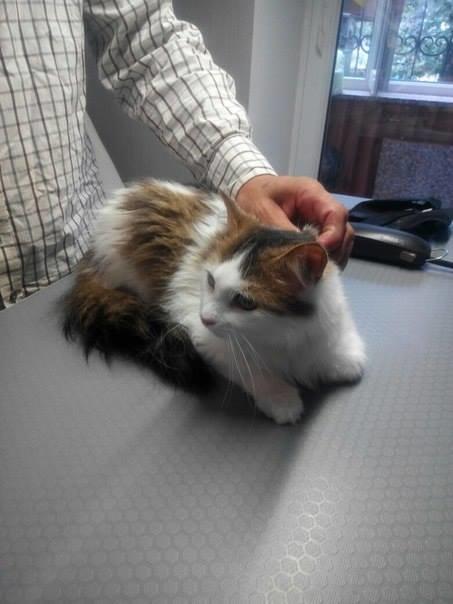 5 спасенных запорожских котиков, которым очень нужен дом, - ФОТО, фото-3