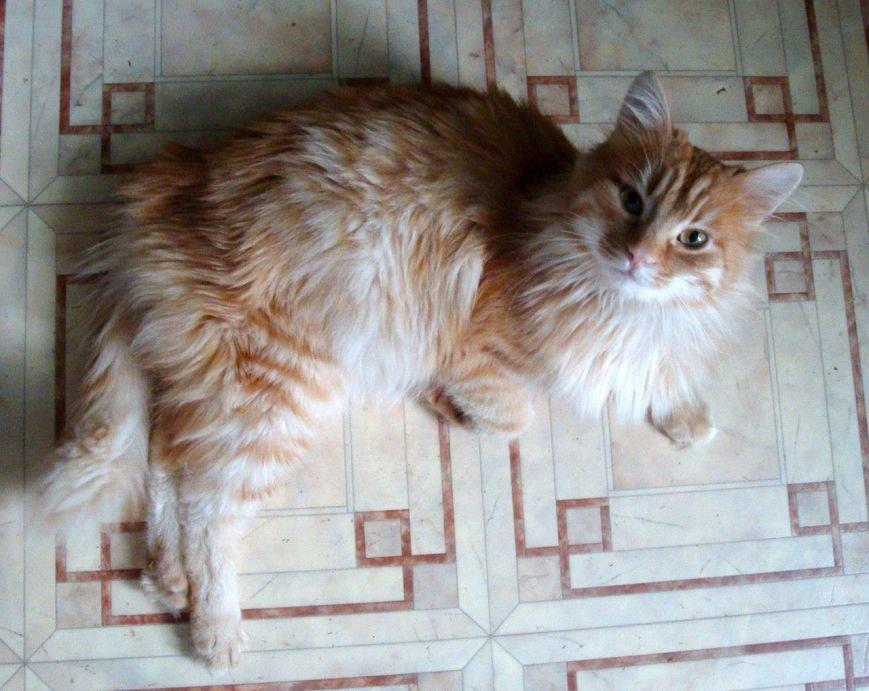 5 спасенных запорожских котиков, которым очень нужен дом, - ФОТО, фото-5