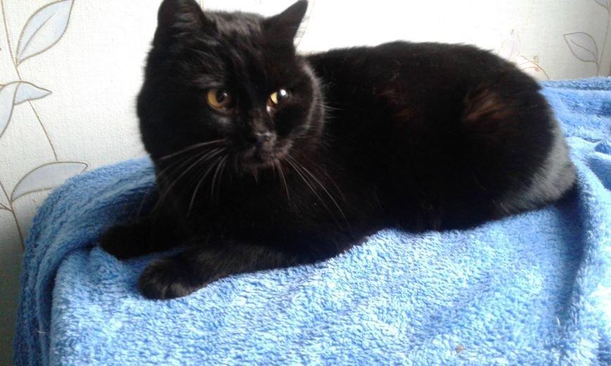 5 спасенных запорожских котиков, которым очень нужен дом, - ФОТО, фото-1