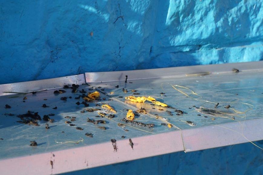 В Кривом Роге повторно сожгли Украинский флаг на стеле Героев (ФОТО), фото-14