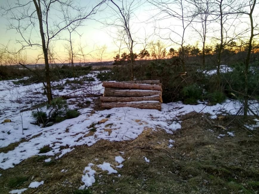 В заповеднике Запорожской области вырубают лес, - ФОТОФАКТ, фото-5