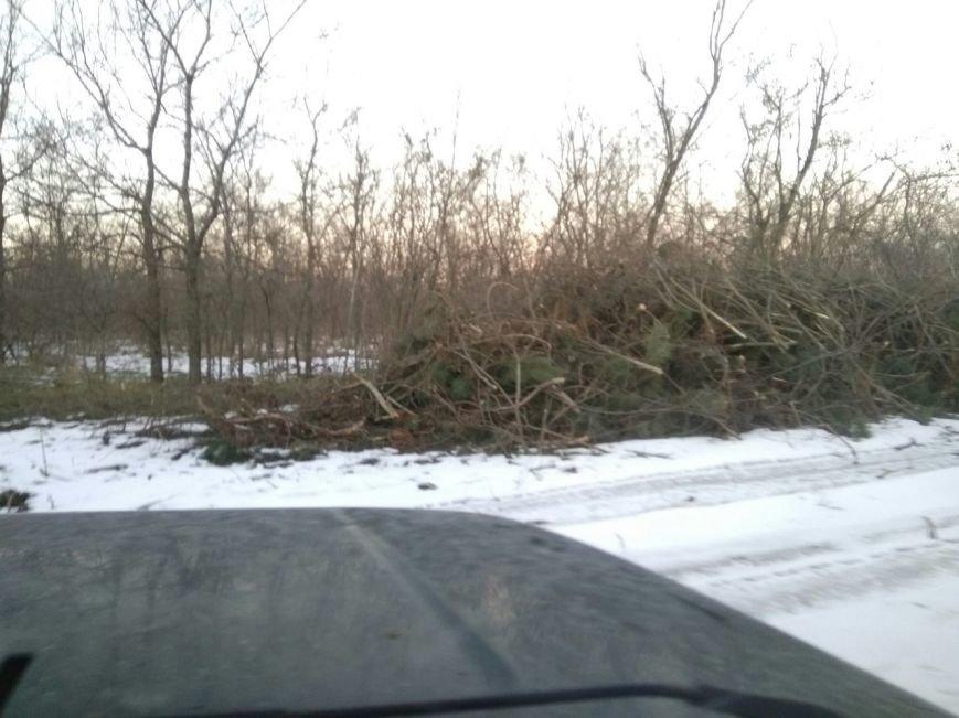 В заповеднике Запорожской области вырубают лес, - ФОТОФАКТ, фото-6