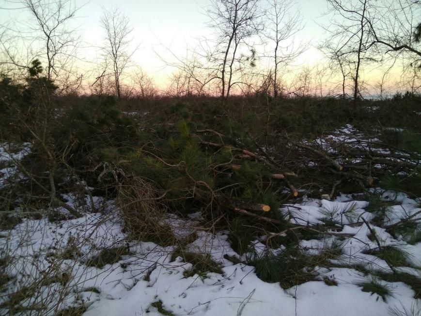 В заповеднике Запорожской области вырубают лес, - ФОТОФАКТ, фото-3